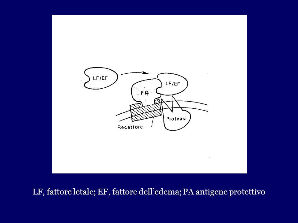 LF, fattore letale; EF, fattore dell'edema; PA antigene protettivo