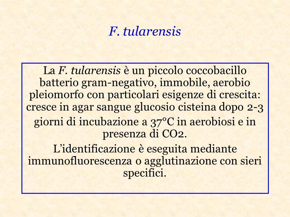 giorni di incubazione a 37°C in aerobiosi e in presenza di CO2.