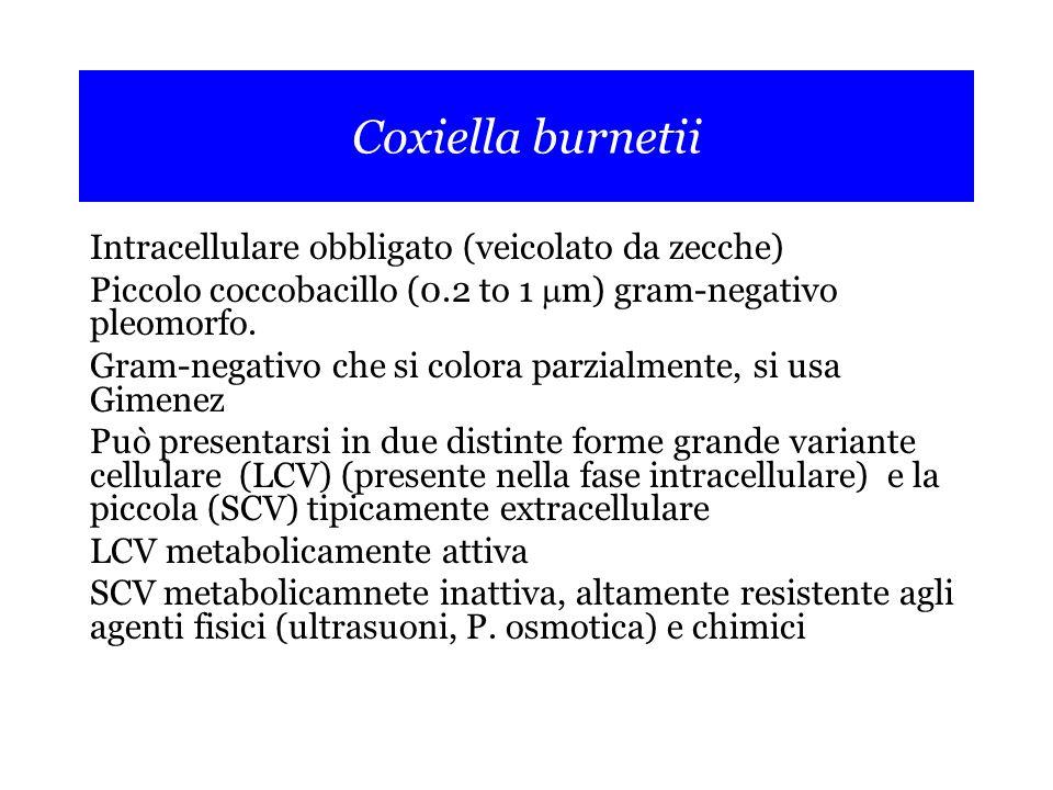Coxiella burnetii Intracellulare obbligato (veicolato da zecche)
