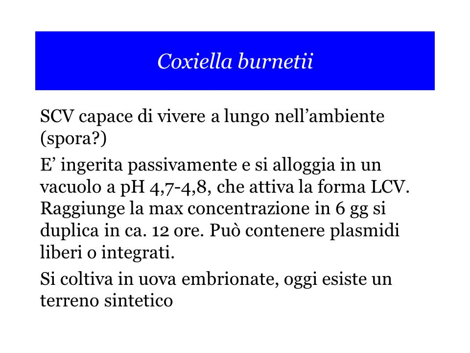 Coxiella burnetii SCV capace di vivere a lungo nell'ambiente (spora )