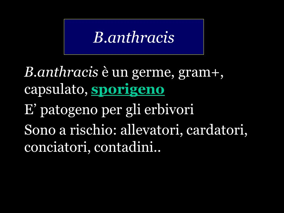B.anthracis B.anthracis è un germe, gram+, capsulato, sporigeno