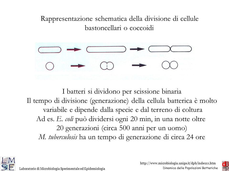 Rappresentazione schematica della divisione di cellule