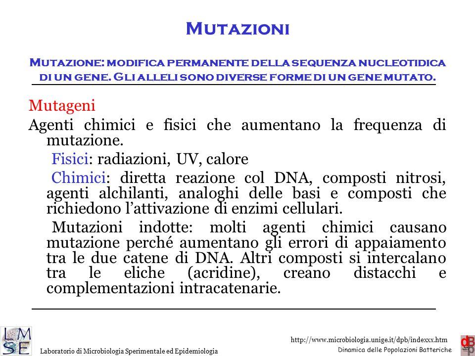 Mutazioni Mutazione: modifica permanente della sequenza nucleotidica di un gene. Gli alleli sono diverse forme di un gene mutato.
