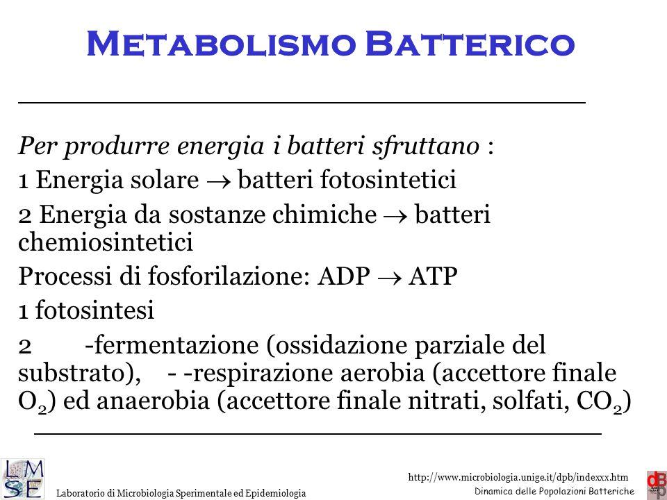 Metabolismo Batterico