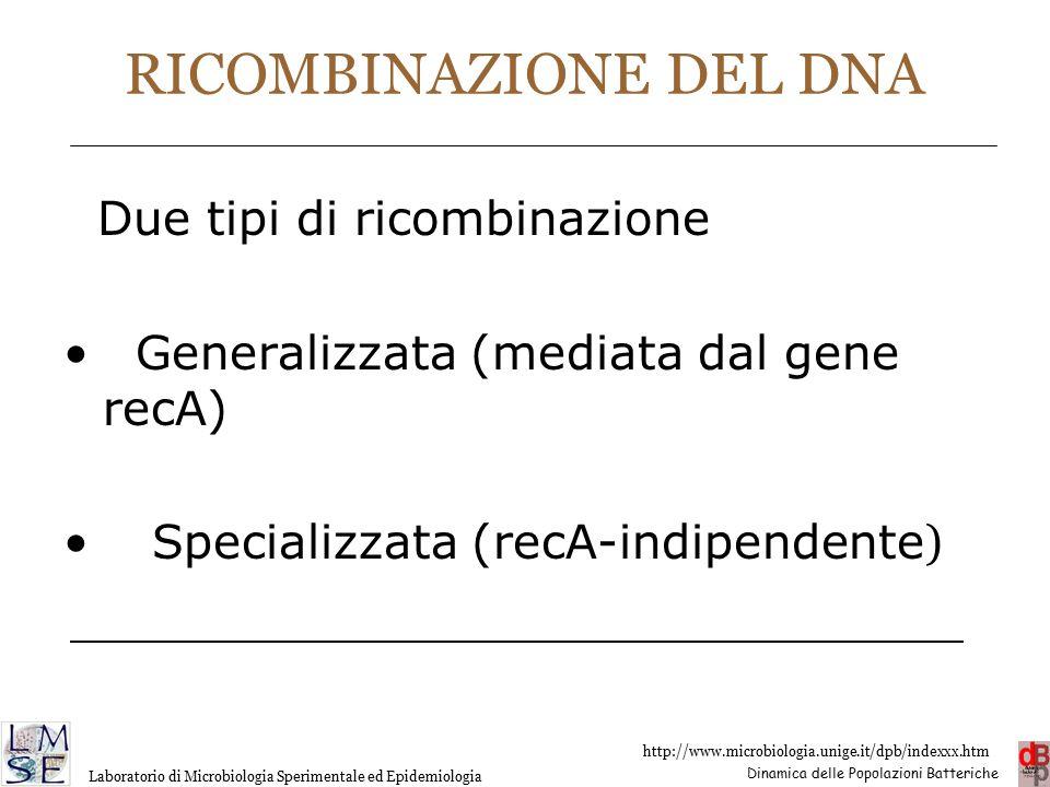 RICOMBINAZIONE DEL DNA