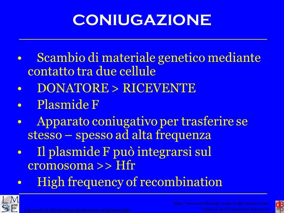 CONIUGAZIONE Scambio di materiale genetico mediante contatto tra due cellule. DONATORE > RICEVENTE.