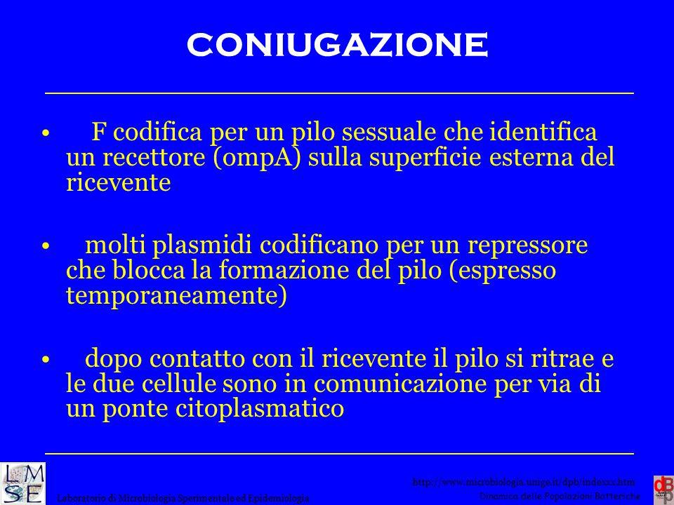 CONIUGAZIONE F codifica per un pilo sessuale che identifica un recettore (ompA) sulla superficie esterna del ricevente.
