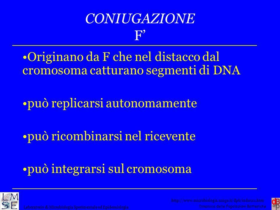 CONIUGAZIONE F' Originano da F che nel distacco dal cromosoma catturano segmenti di DNA. può replicarsi autonomamente.