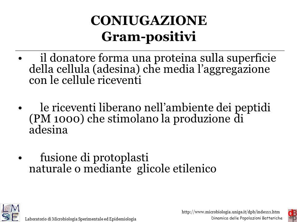 CONIUGAZIONE Gram-positivi