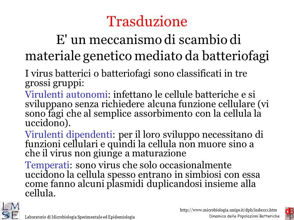 Trasduzione E un meccanismo di scambio di materiale genetico mediato da batteriofagi