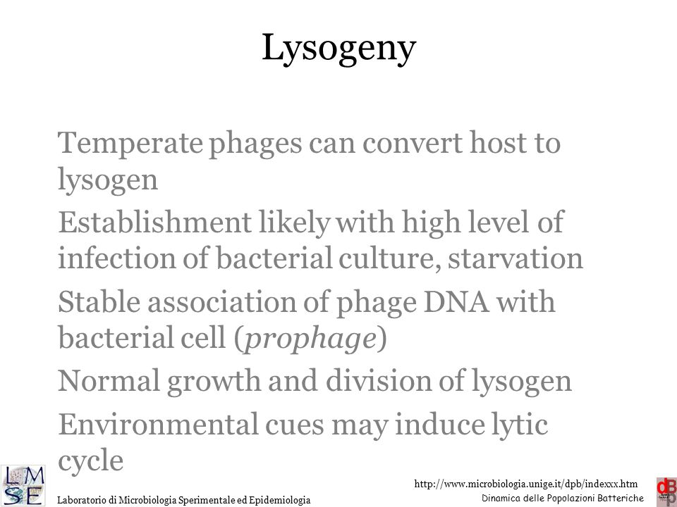 Lysogeny Temperate phages can convert host to lysogen