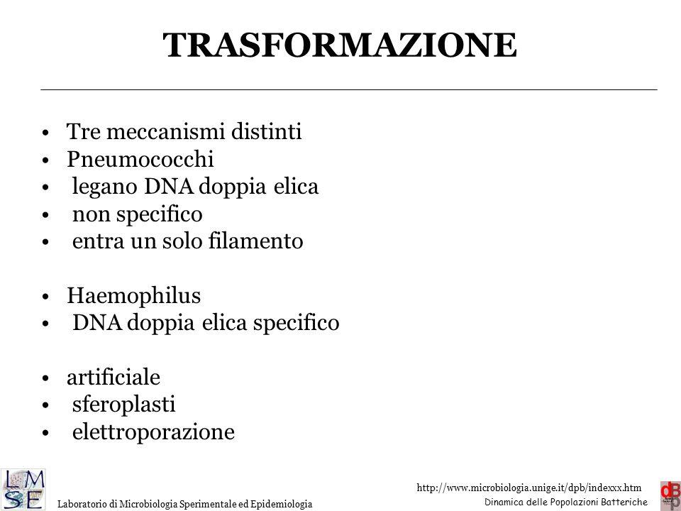 TRASFORMAZIONE Tre meccanismi distinti Pneumococchi