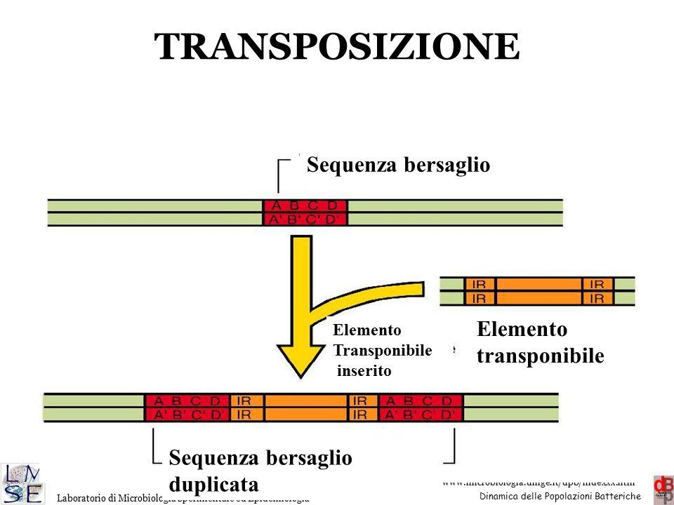 TRANSPOSIZIONE Sequenza bersaglio Elemento transponibile