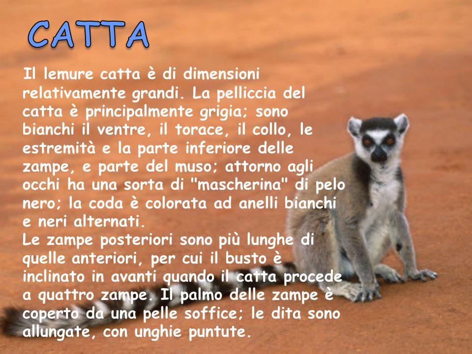 CATTA