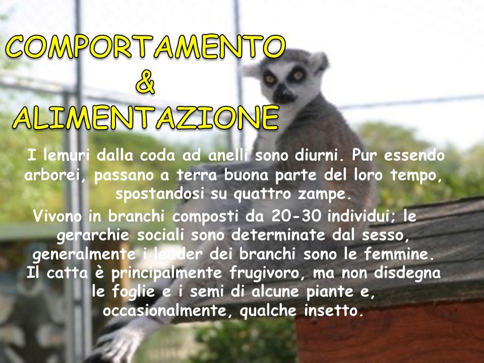 COMPORTAMENTO & ALIMENTAZIONE