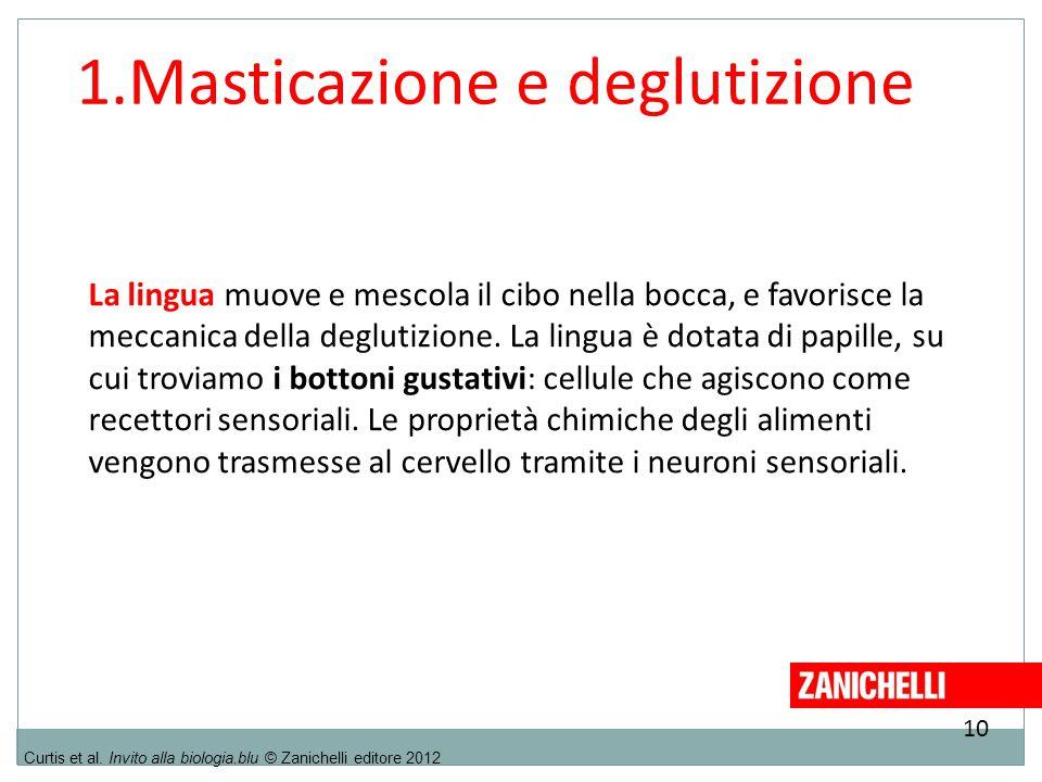 1.Masticazione e deglutizione