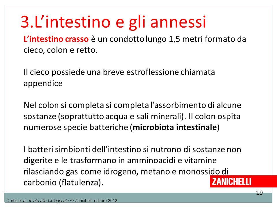 3.L'intestino e gli annessi