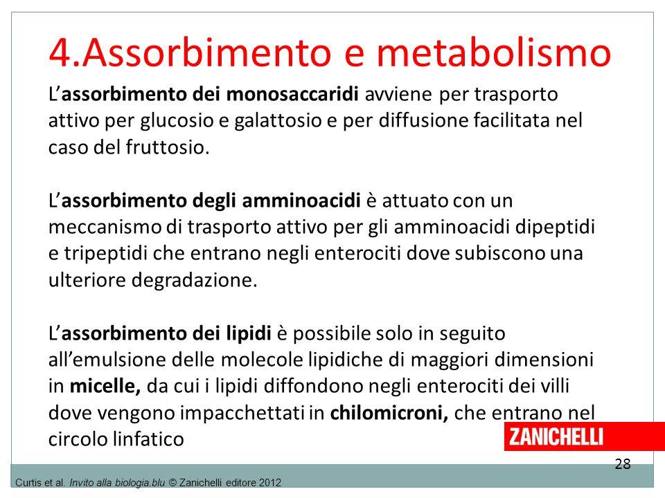 4.Assorbimento e metabolismo
