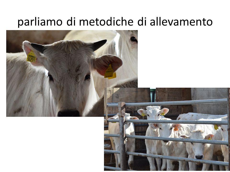 parliamo di metodiche di allevamento