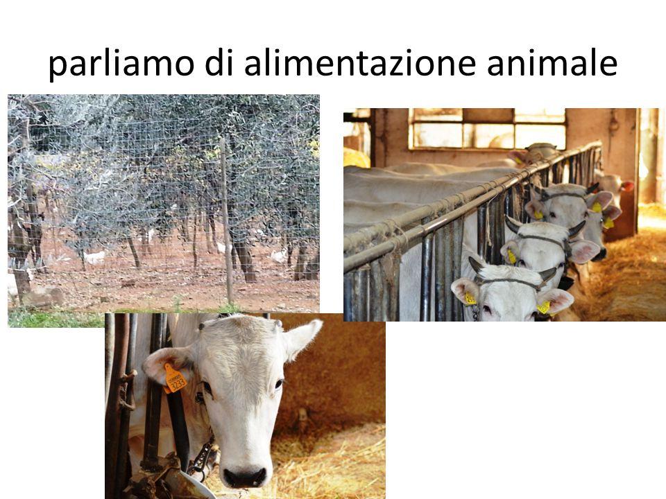 parliamo di alimentazione animale