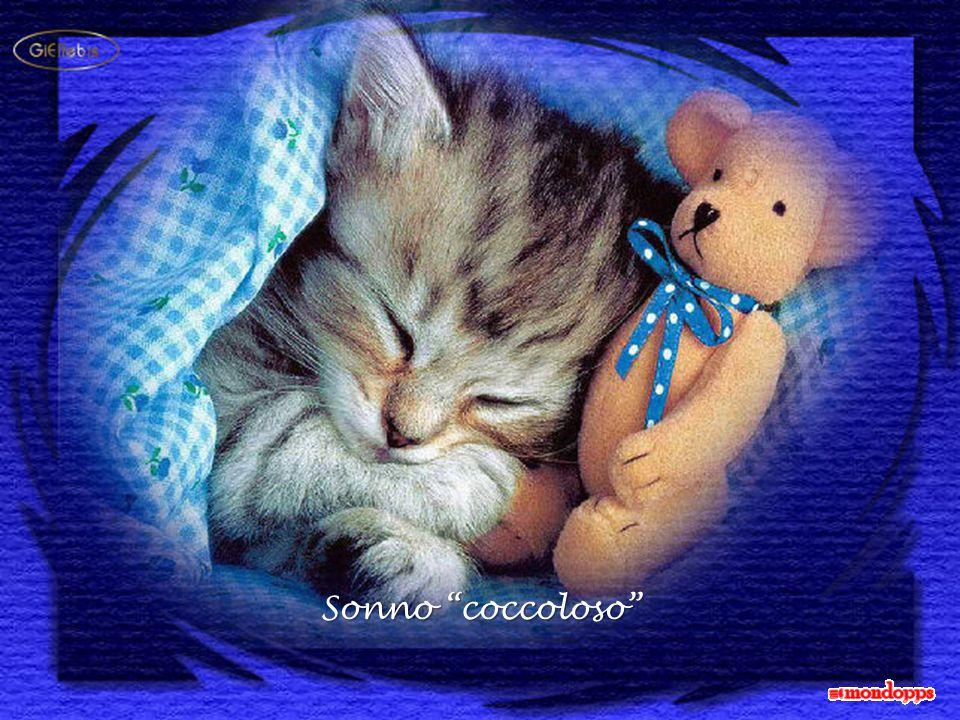 Sonno coccoloso