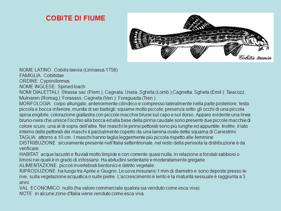 COBITE DI FIUME