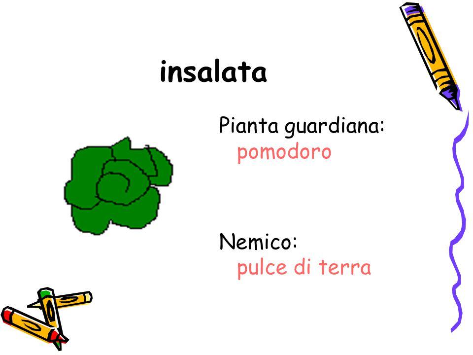 insalata Pianta guardiana: pomodoro Nemico: pulce di terra