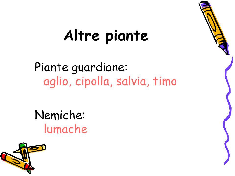 Altre piante Piante guardiane: aglio, cipolla, salvia, timo