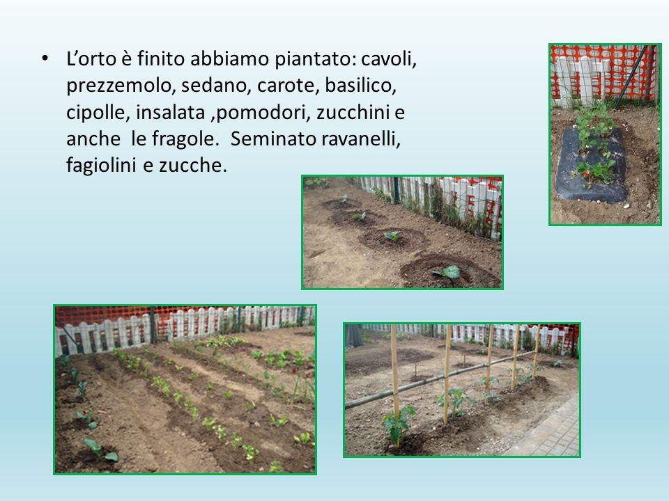 L'orto è finito abbiamo piantato: cavoli, prezzemolo, sedano, carote, basilico, cipolle, insalata ,pomodori, zucchini e anche le fragole.