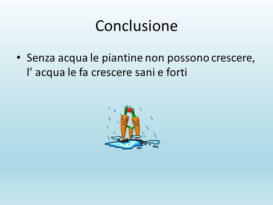 Conclusione Senza acqua le piantine non possono crescere, l' acqua le fa crescere sani e forti