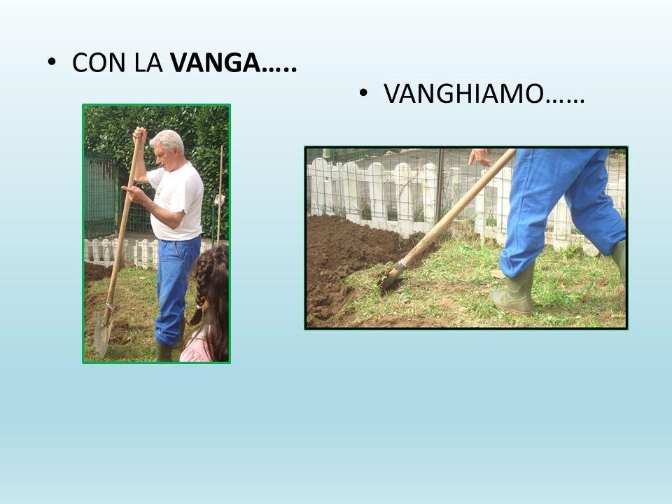 CON LA VANGA….. VANGHIAMO……