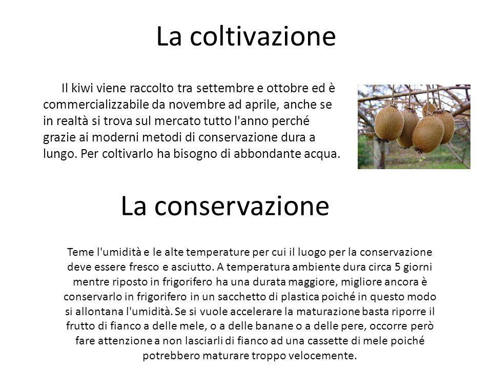 La coltivazione La conservazione
