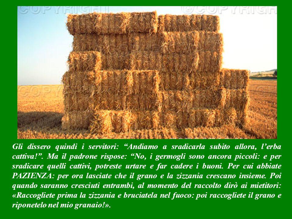 Gli dissero quindi i servitori: Andiamo a sradicarla subito allora, l'erba cattiva! .