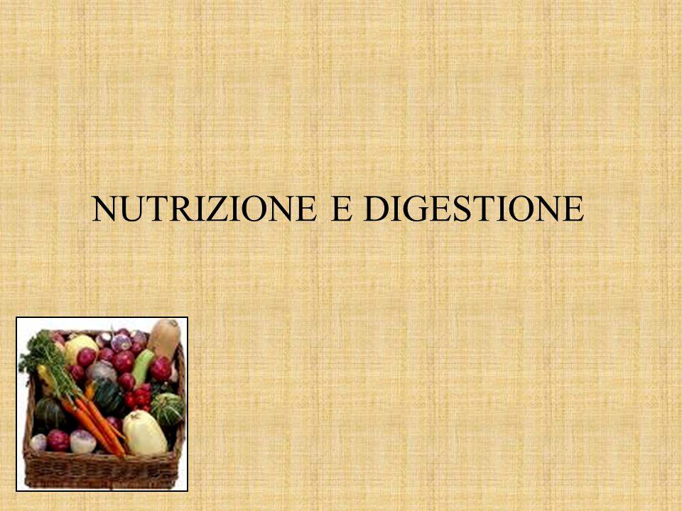 NUTRIZIONE E DIGESTIONE
