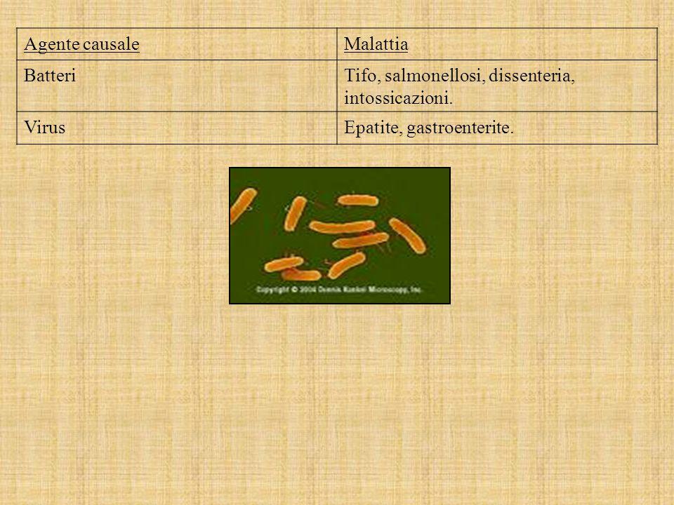 Agente causale Malattia. Batteri. Tifo, salmonellosi, dissenteria, intossicazioni.