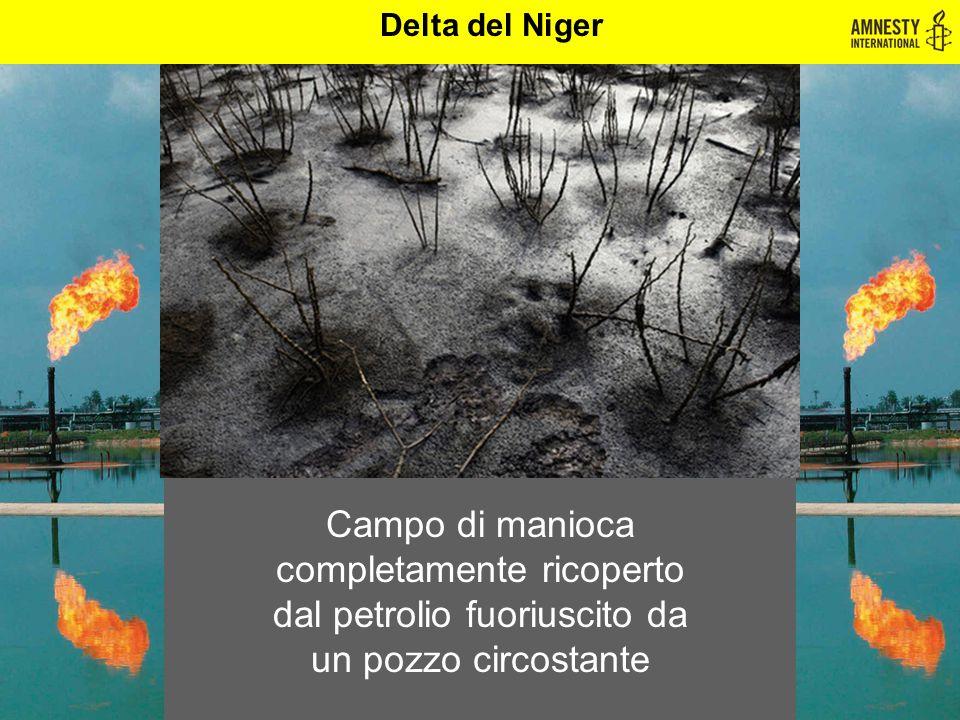 Delta del Niger Campo di manioca completamente ricoperto dal petrolio fuoriuscito da un pozzo circostante.