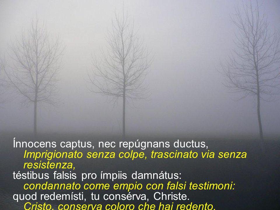 Ínnocens captus, nec repúgnans ductus,