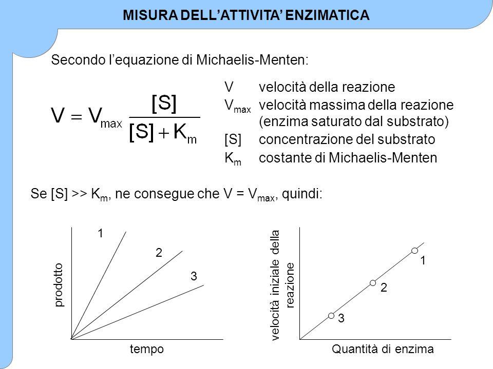 MISURA DELL'ATTIVITA' ENZIMATICA