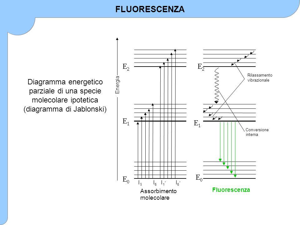 FLUORESCENZA E. 1. 2. Assorbimento. molecolare. l. 5. Energia. ' Conversione. interna. Rilassamento.