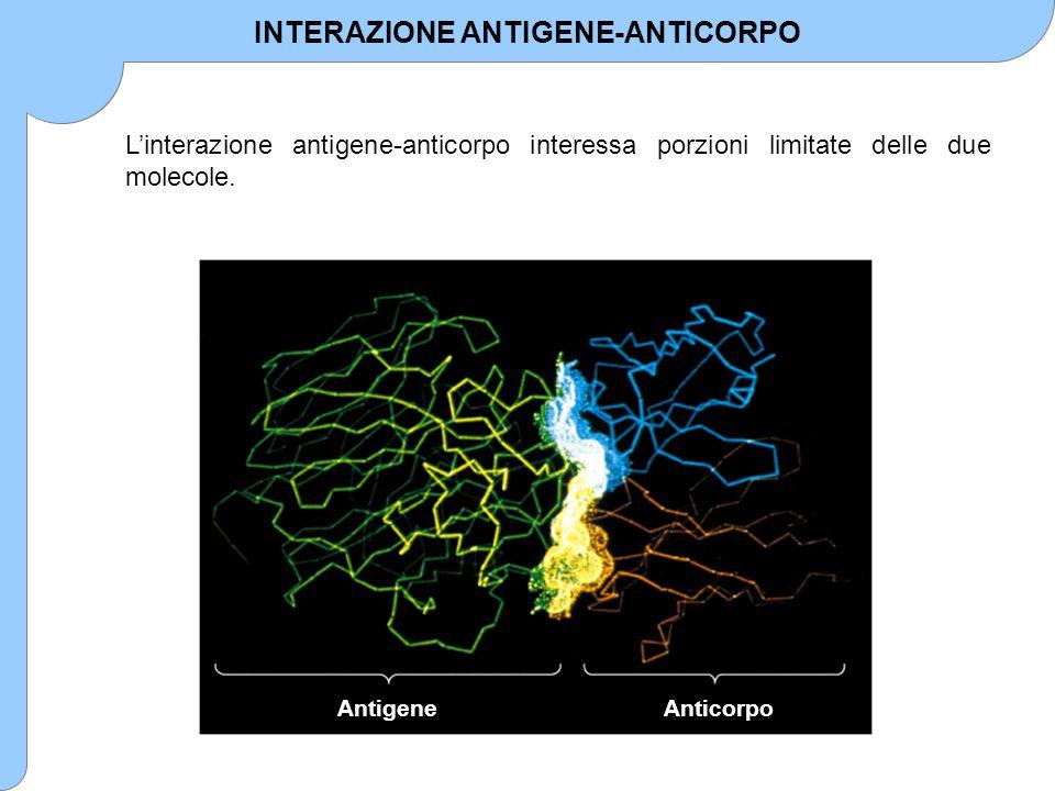 INTERAZIONE ANTIGENE-ANTICORPO