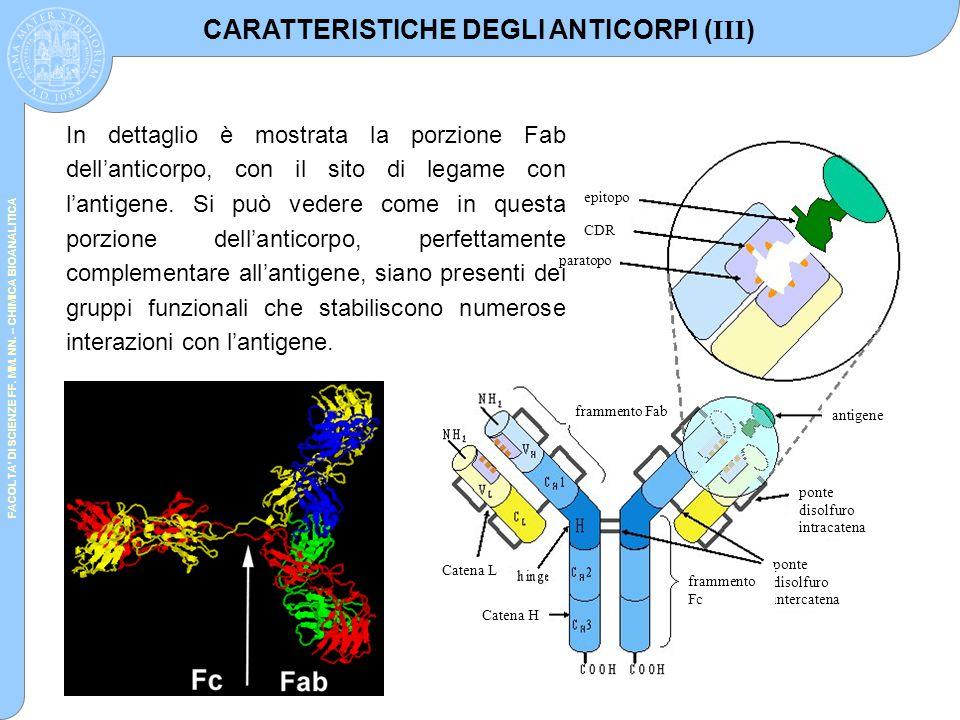 CARATTERISTICHE DEGLI ANTICORPI (III)