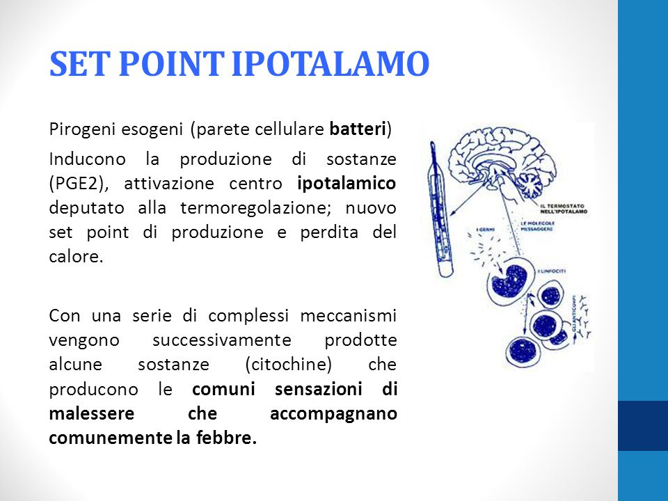 SET POINT IPOTALAMO
