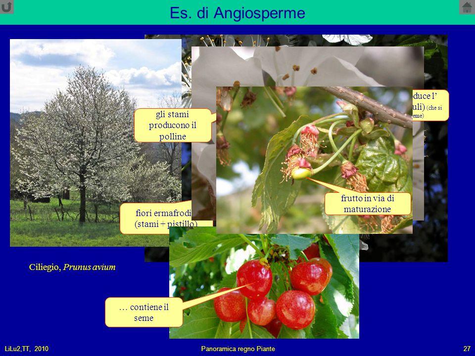 Es. di Angiosperme il pistillo produce l' ovulo (o gli ovuli) (che si trasformerà in seme) gli stami producono il polline.