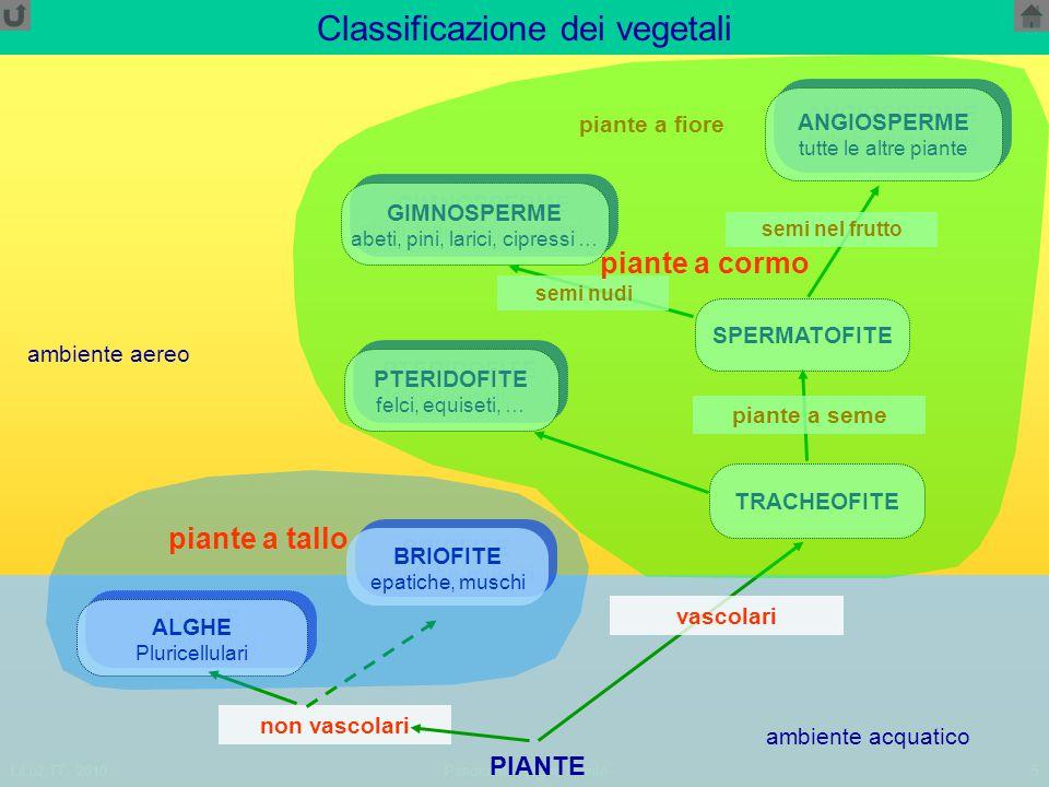 Classificazione dei vegetali