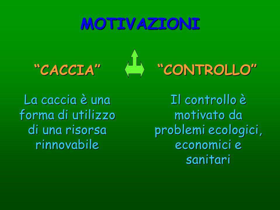 MOTIVAZIONI CACCIA CONTROLLO