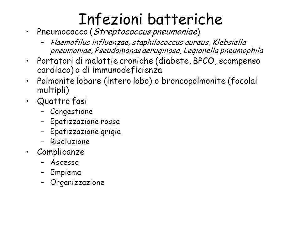 Infezioni batteriche Pneumococco (Streptococcus pneumoniae)