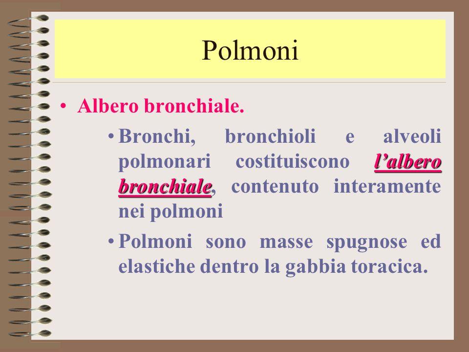 Polmoni Albero bronchiale.