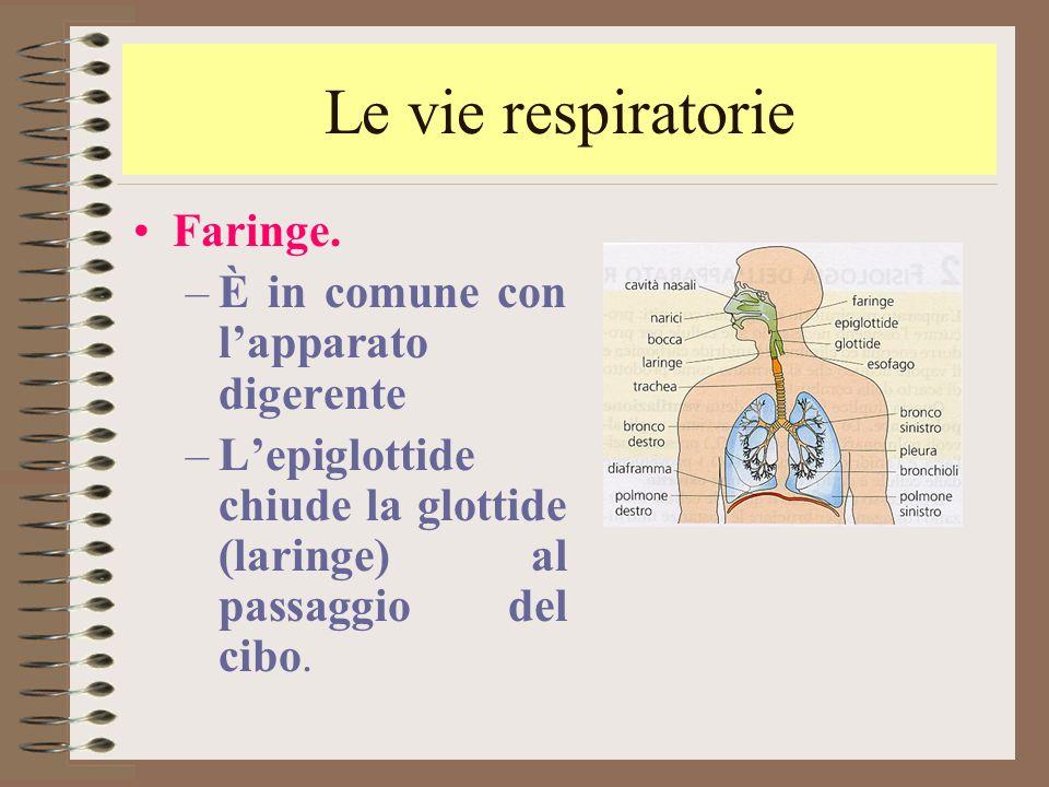 Le vie respiratorie Faringe. È in comune con l'apparato digerente