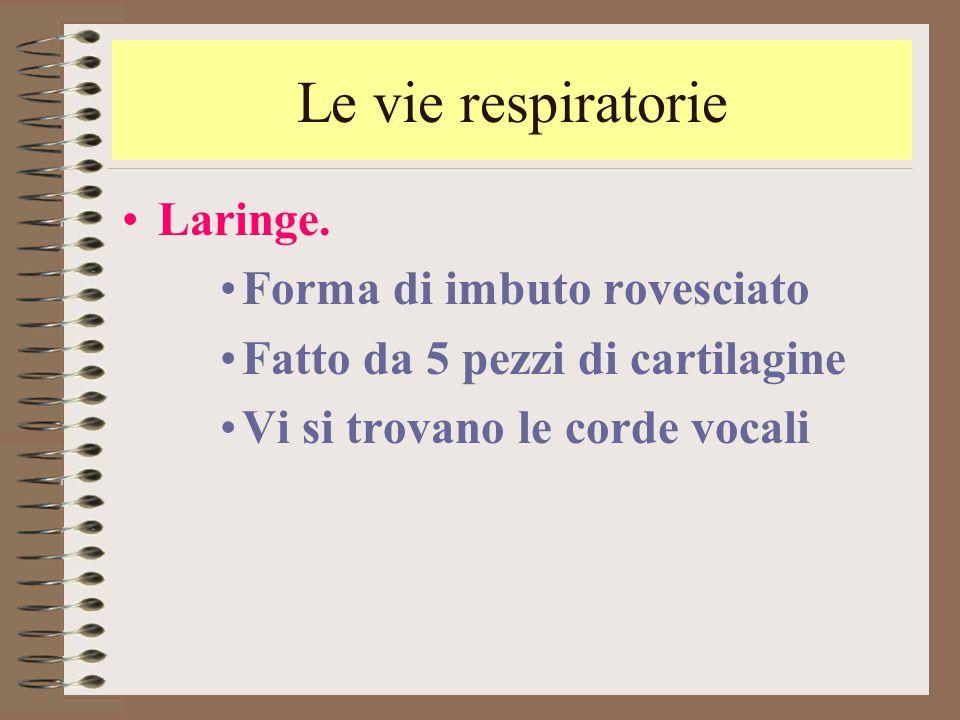 Le vie respiratorie Laringe. Forma di imbuto rovesciato