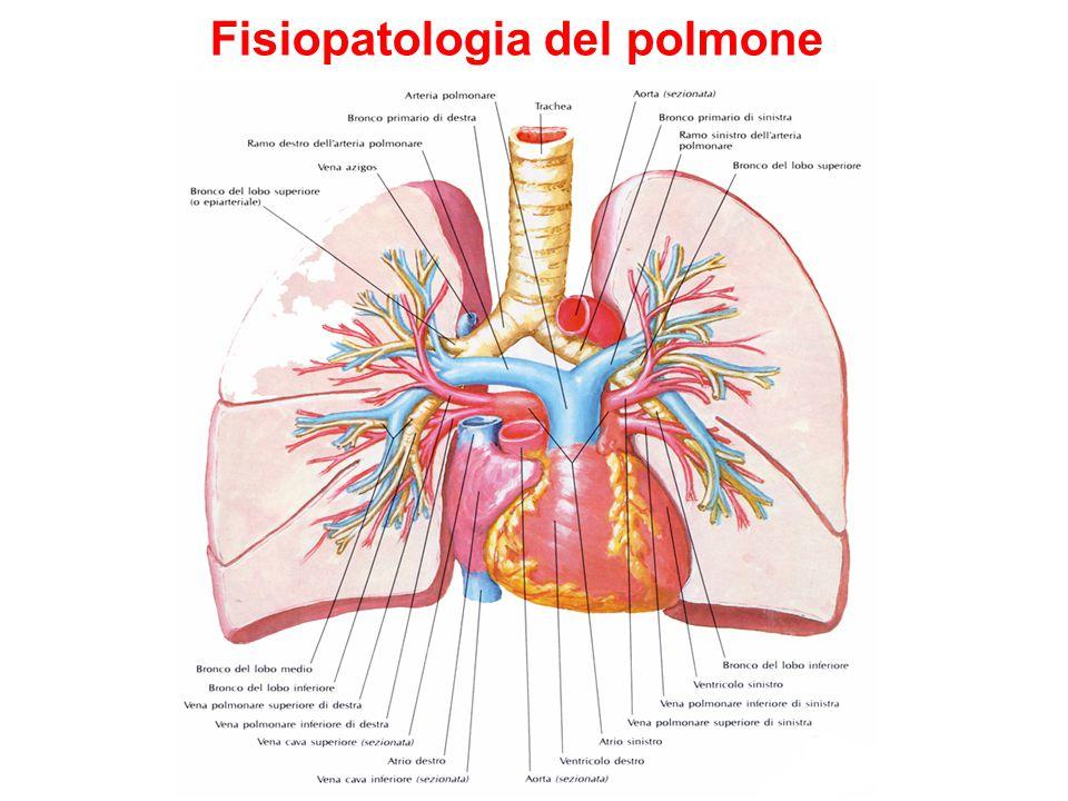 Fisiopatologia del polmone